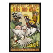 Steve Martin Rare Bird Poster